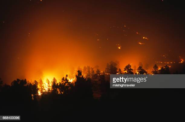 Forest fire burning trees glow Bailey Colorado Rocky Mountain wildfire