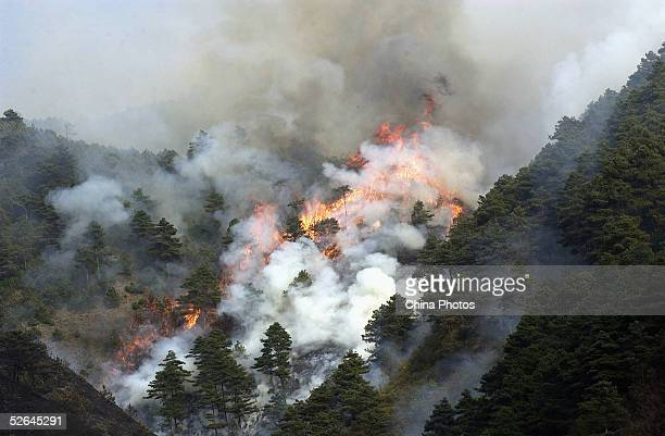 Forest fire burns at Siying Village Mountain April 18, 2005 in Songming County, Yunnan Province, China. The fire lasted six hours and destroyed over...