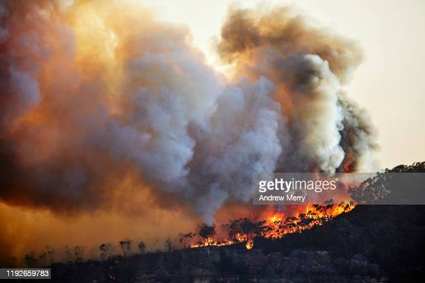 forest fire, bushfire with flames and sun illuminated smoke clouds at dusk on mountain ridge, blue mountains, australia - australia fire stock pictures, royalty-free photos & images