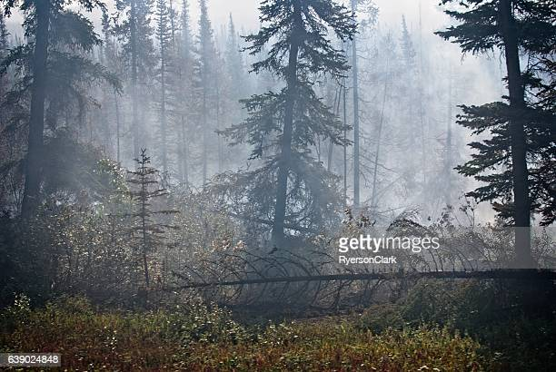Forest fire damage with smoke.