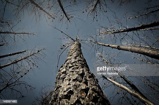 forest fire - el hoyo - chubut - patagonia argenti - radicella stock photos and pictures