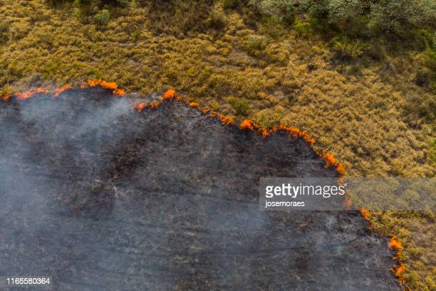 forest fire in brazil - global warming stock pictures, royalty-free photos & images