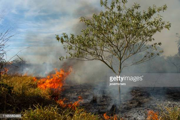 forest fire in brazil - climate stock pictures, royalty-free photos & images