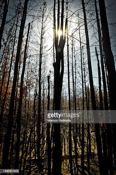 forest fire in el hoyo - radicella stock photos and pictures