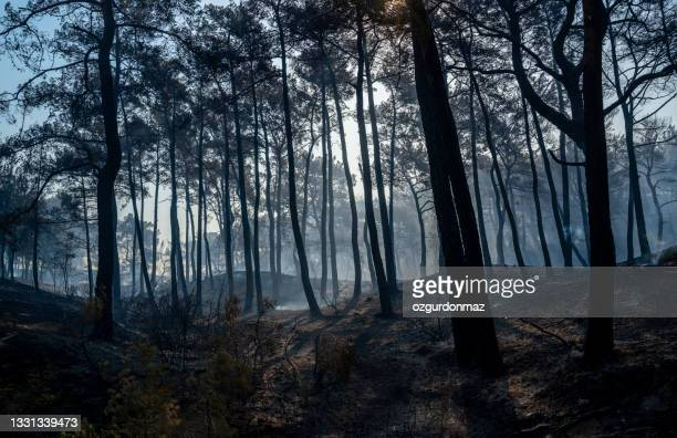 forest fire in manavgat, antalya, turkey - pine woodland stock pictures, royalty-free photos & images