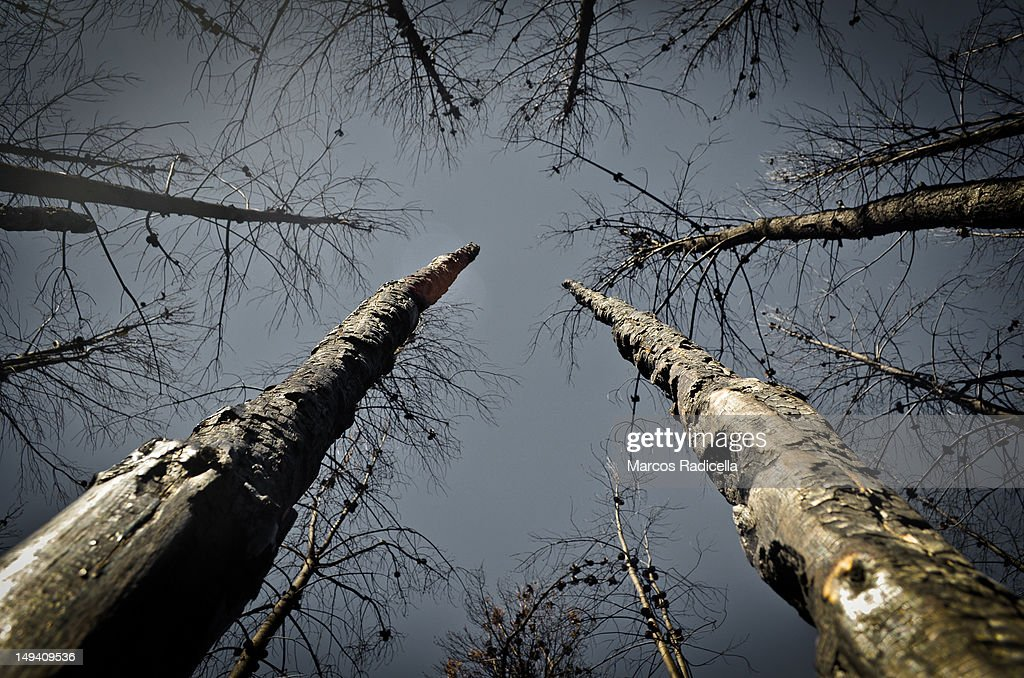 Forest fire in Patagonia Argentina : Stock Photo