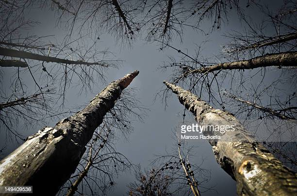 forest fire in patagonia argentina - radicella stock pictures, royalty-free photos & images