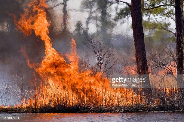 forest fire orange flames and heat shimmer - slash and burn stock pictures, royalty-free photos & images