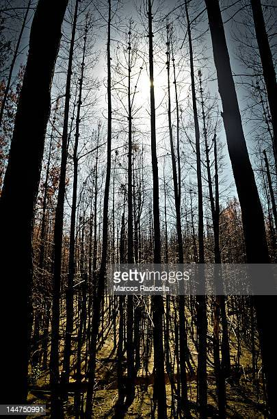 forest fire -  patagonia argentina - radicella stock photos and pictures