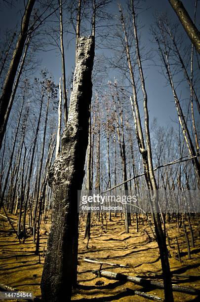 forest fire - radicella stock photos and pictures