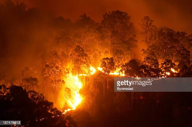 forest fire - australia fire stock pictures, royalty-free photos & images