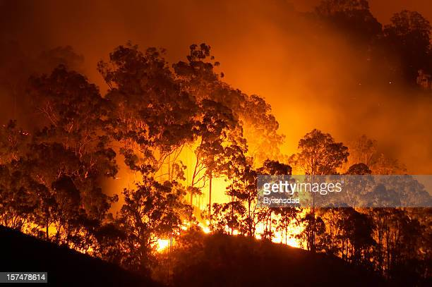 forest fire - australian bushfire stock pictures, royalty-free photos & images