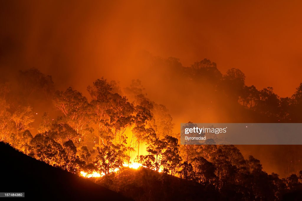 Forest fire : Stock Photo