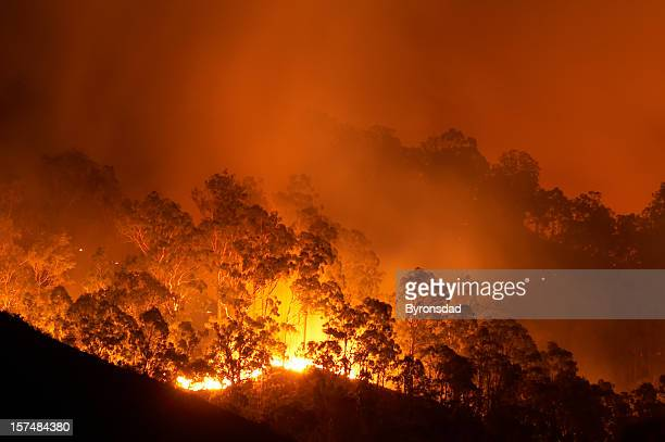 forest fire - australien stock-fotos und bilder