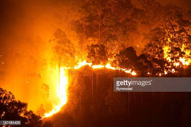 forest fire - slash and burn stock pictures, royalty-free photos & images