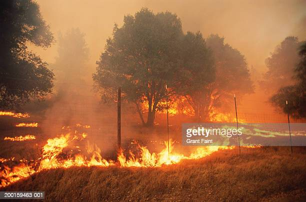 forest fire - kalifornien stock-fotos und bilder