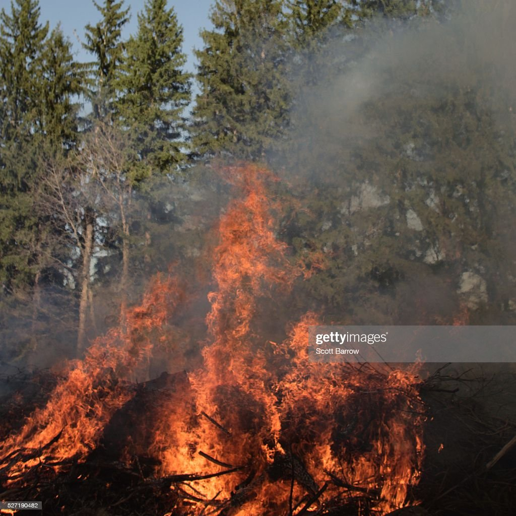 Forest fire : Stock-Foto