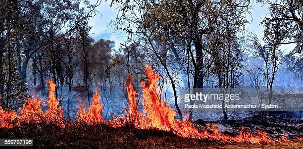 forest fire - bushfires stock photos and pictures