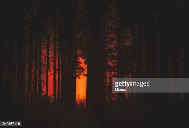 forest fire - scary setting stock photos and pictures