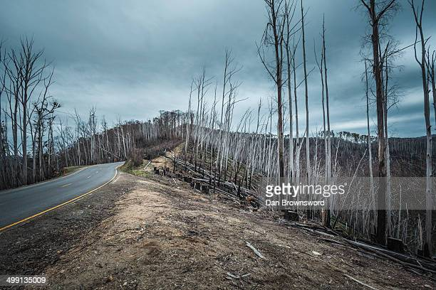 forest fire ravaged trees towards mt hotham, victoria, australia - bushfire australia stock pictures, royalty-free photos & images