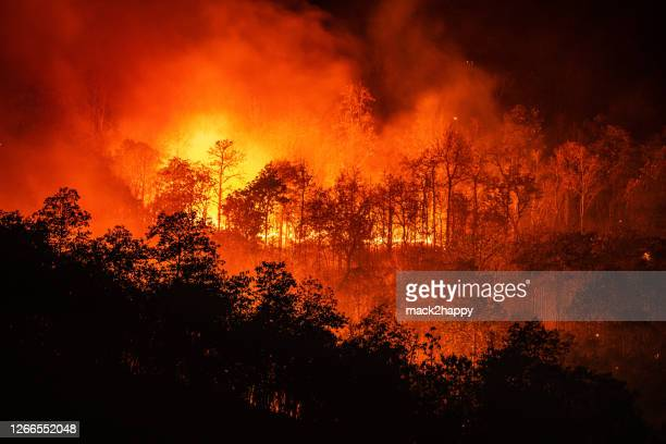 forest fire wildfire at night time on the mountain with big smoke - forest fire stock pictures, royalty-free photos & images