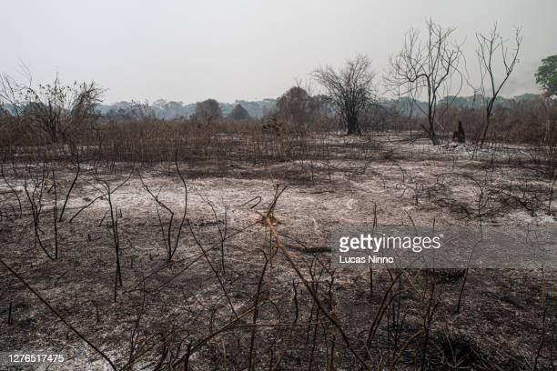 forest fires aftermath in pantanal - destruction stock pictures, royalty-free photos & images