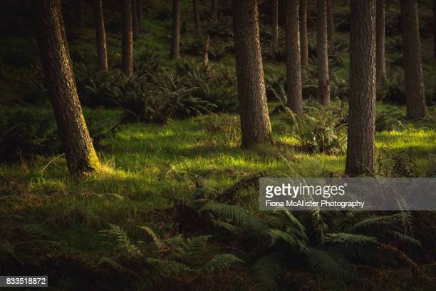 Forest Floor : Darkness And Light