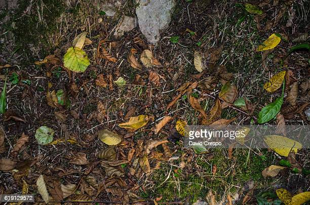 forest floor - forest floor stock photos and pictures