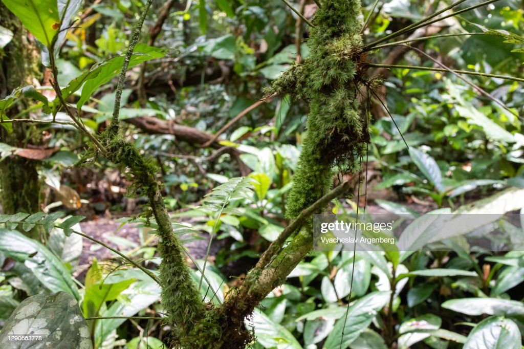 Forest floor, rich epiphytes, Borneo, Malaysia : Stock Photo