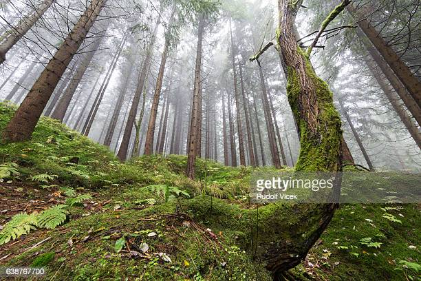 Forest, Fog, low angle view