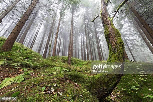 forest, fog, low angle view - laubbaum stock-fotos und bilder