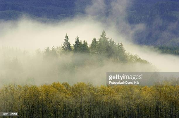 Forest from above with fog