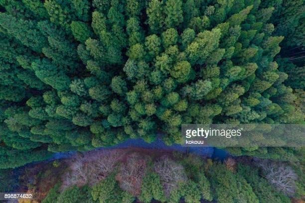 skog från fågelperspektiv.