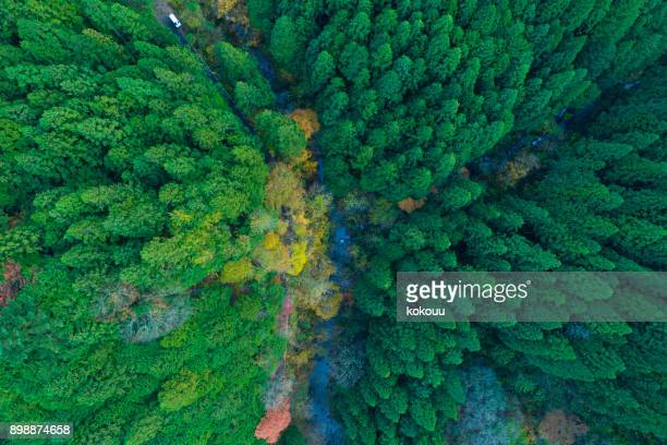 bosque desde el punto de vista de pájaro.