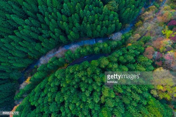 forest from bird's eye view. - scenics stock pictures, royalty-free photos & images