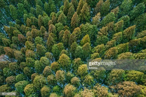 bosque desde el punto de vista de pájaro. - top fotografías e imágenes de stock