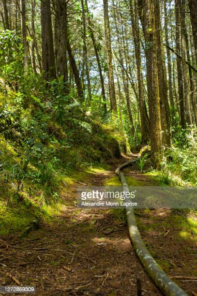 forest full of tall trees with moss or lichen, surrounded by many plants - colombia stock pictures, royalty-free photos & images