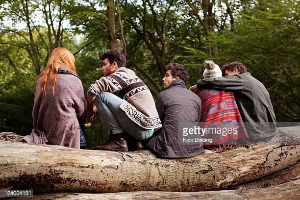 forest fun 50 - côte à côte photos et images de collection
