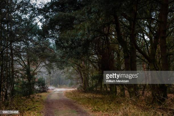 forest gate - william mevissen fotografías e imágenes de stock