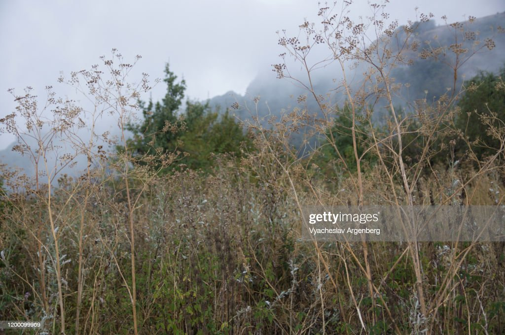 Forest glades in Haphalsky Nature Reserve, plants on grassy meadows in the mountains of Crimea : Stock Photo