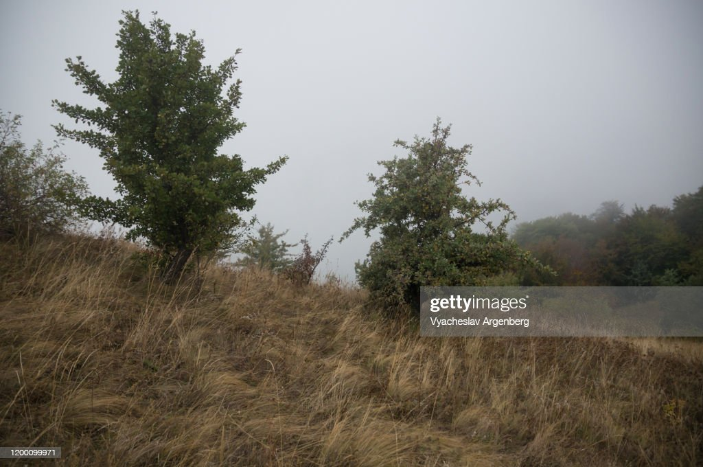 Forest glades in Haphalsky Nature Reserve, small trees on grassy meadows in Crimean Mountains : Stock Photo