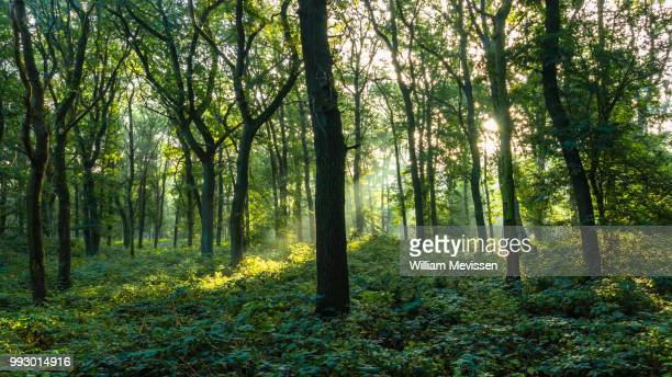 forest green - william mevissen stock pictures, royalty-free photos & images