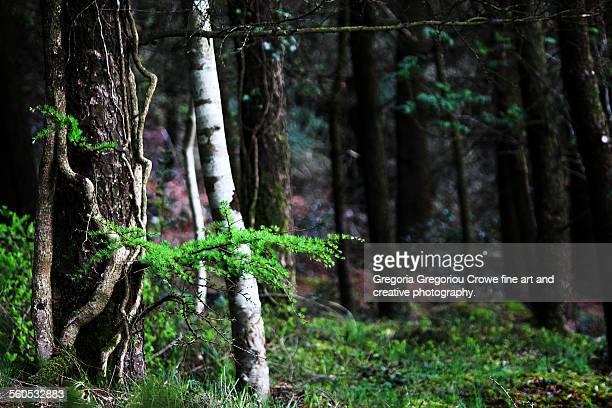 forest growth - gregoria gregoriou crowe fine art and creative photography - fotografias e filmes do acervo