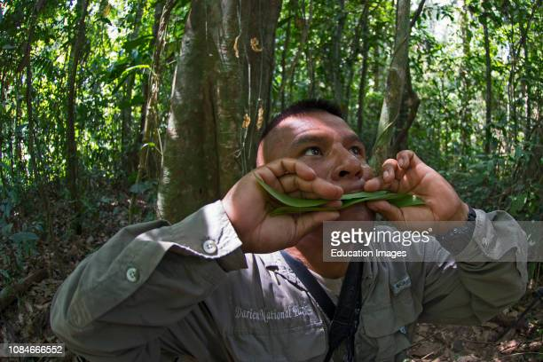 Forest guide Isaac Pizarro imitating the call of a Harpy Eagle Darien National Park Panama