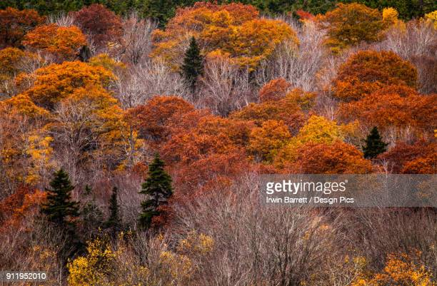 a forest hillside in autumn - bedford nova scotia stock pictures, royalty-free photos & images
