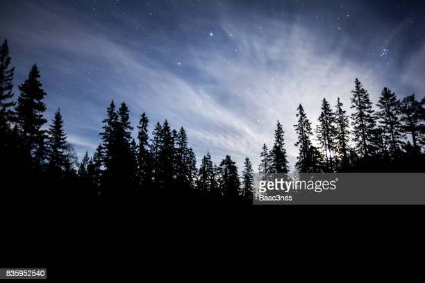 Forest illuminated by the moon