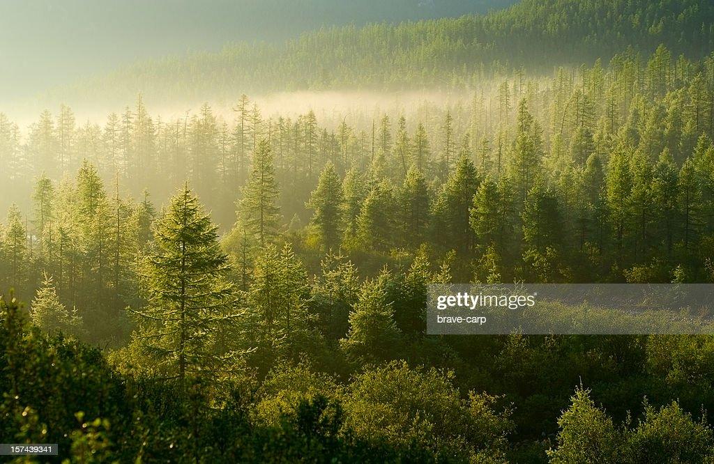 Forest illuminé par le soleil levant : Photo