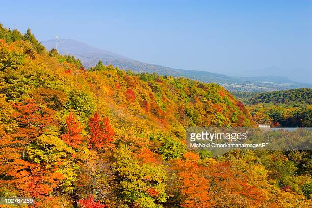 A forest in autumn. Hachimantai, Iwate Prefecture, Japan