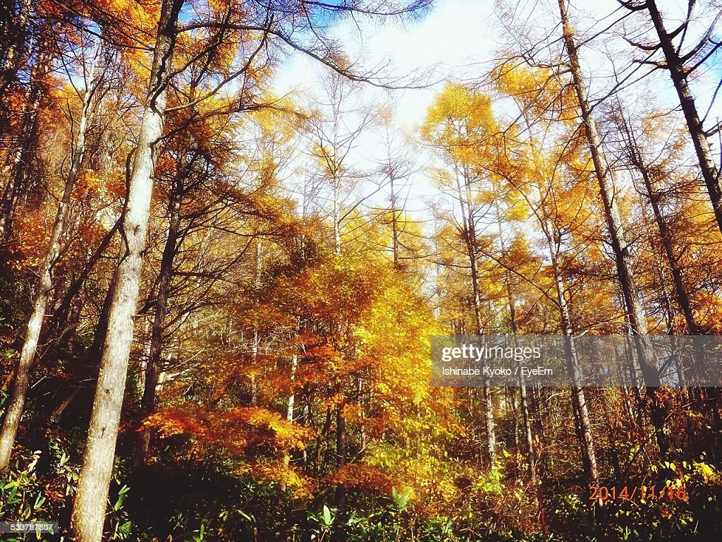 Forest In Autumn : Foto stock