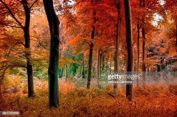 forest in autumn - sinnlichkeit stock pictures, royalty-free photos & images